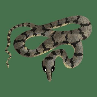 Dog faced water snake