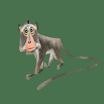Nicobar long-tailed macaque