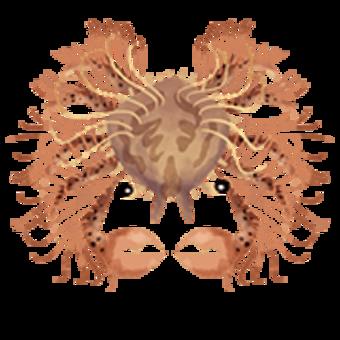Decorator crabs