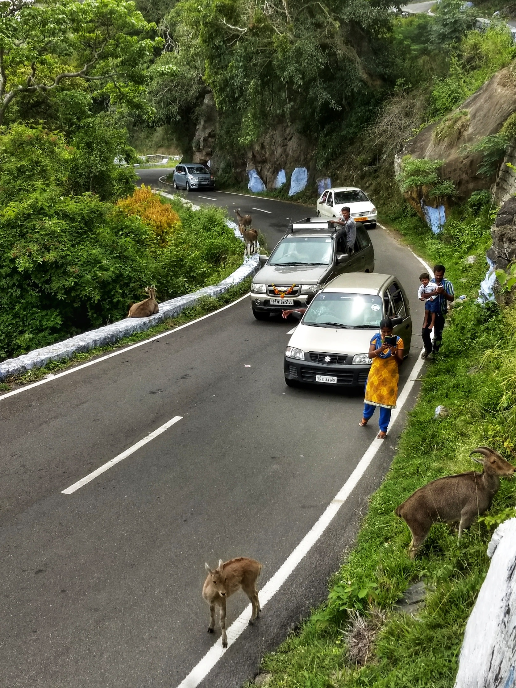 Not only do tourists disturb the animals, they also obstruct traffic by halting at various places along the 40-km stretch that cuts through this pristine forest. Photo: Pravin Shanmughanadam
