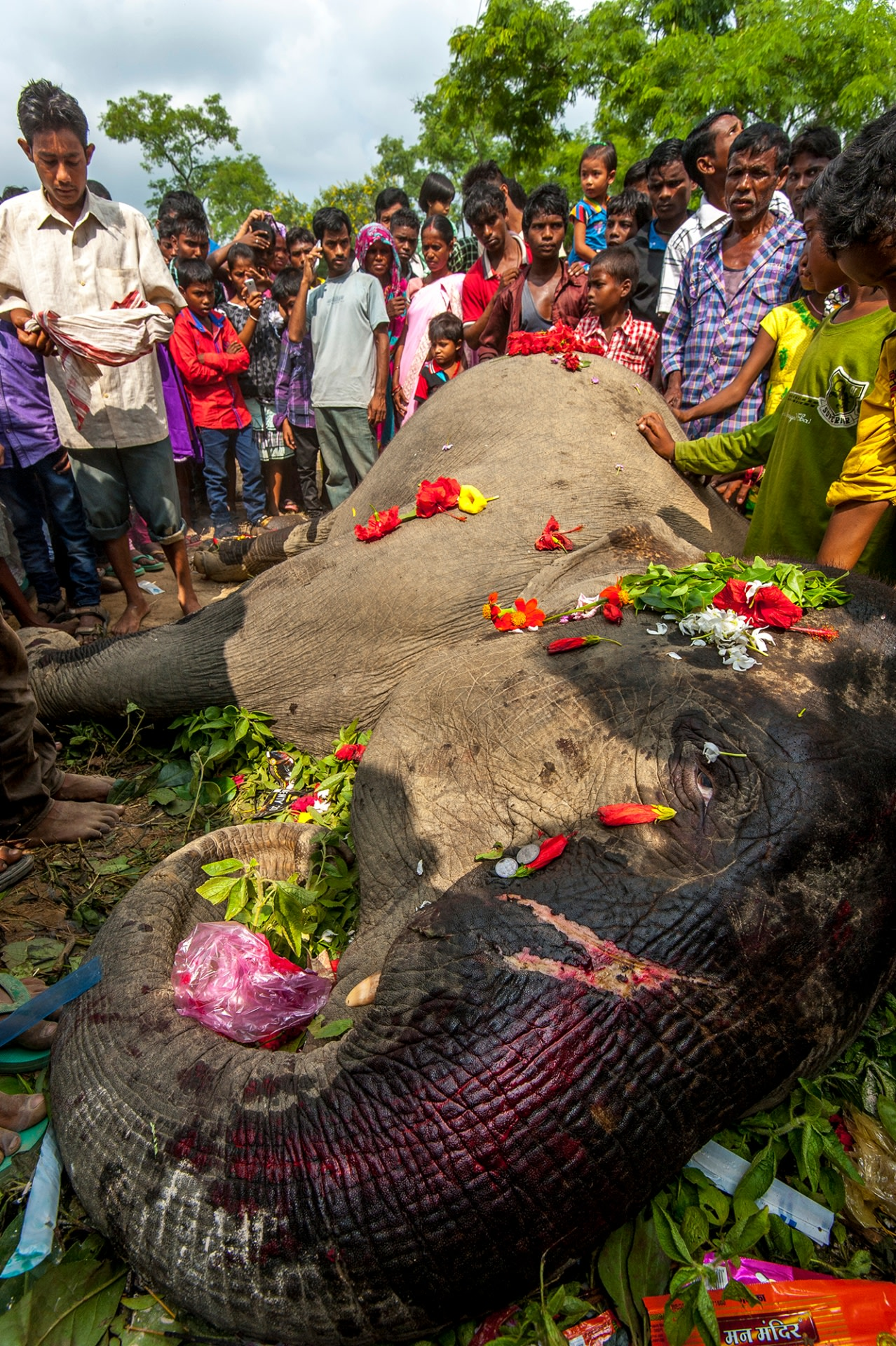 Villagers organise a funeral for an elephant that was accidentally electrocuted in Koothalguri tea state, near Hollongapar Gibbon Sanctuary. Elephant funerals are not uncommon and reinforce the bond between people and animals. Photo: Udayan Borthakur