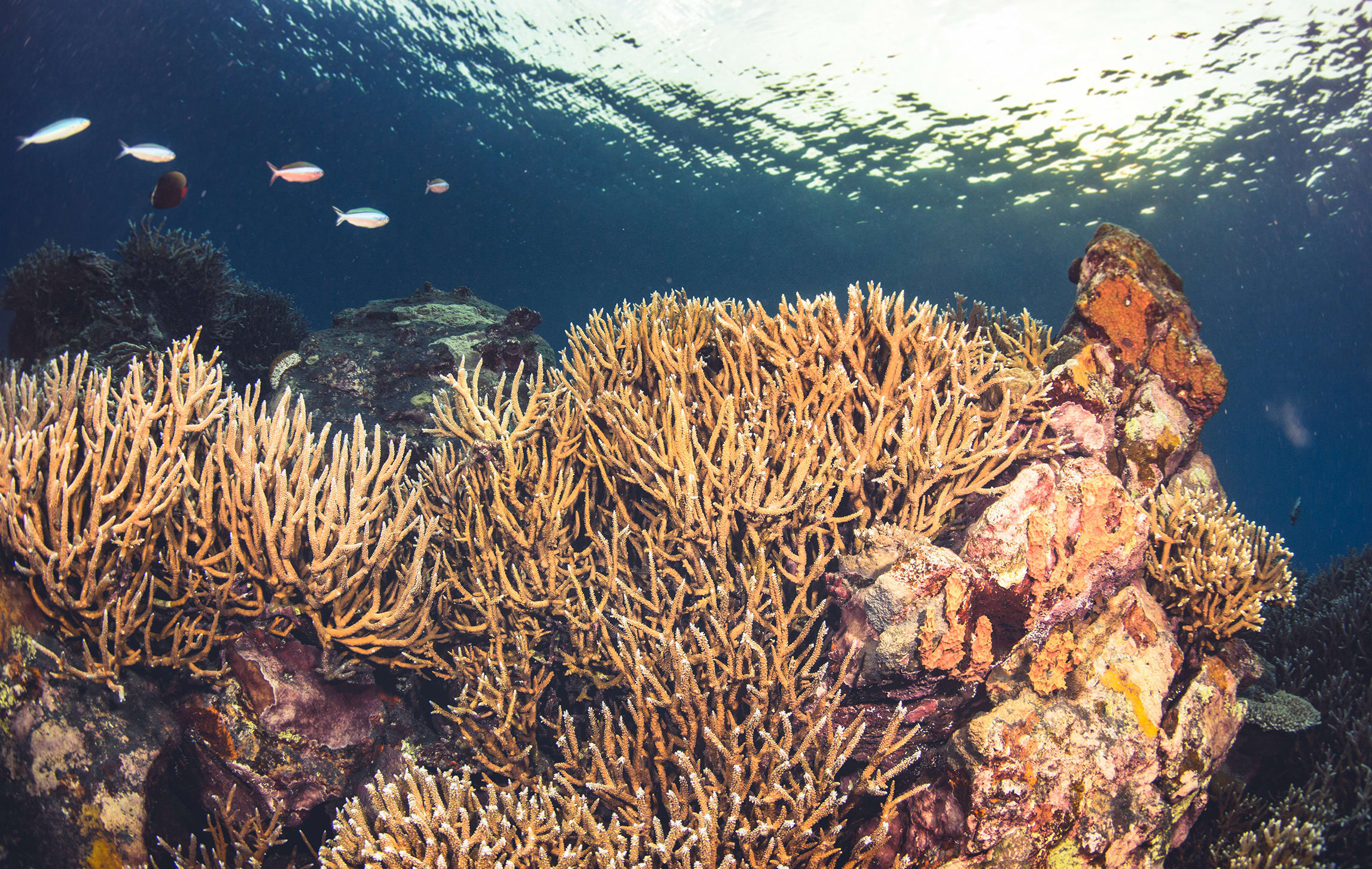 Corals need hard natural surfaces like rocks and shells to grow on, and they flourish in clear salty water with lots of sunlight. Pollution suffocates and kills them.