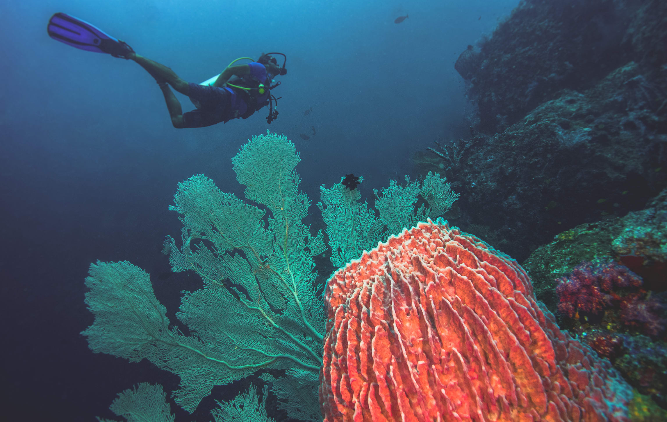 A range of different coral, like this green sea-fan coral and orange barrel sponge, live side by side on a reef. Barrel sponges, which come in a range of colours, tend to live for thousands of years. They are the reef's primary recycling units and are also responsible for providing nutrition to many of the organisms that live there.
