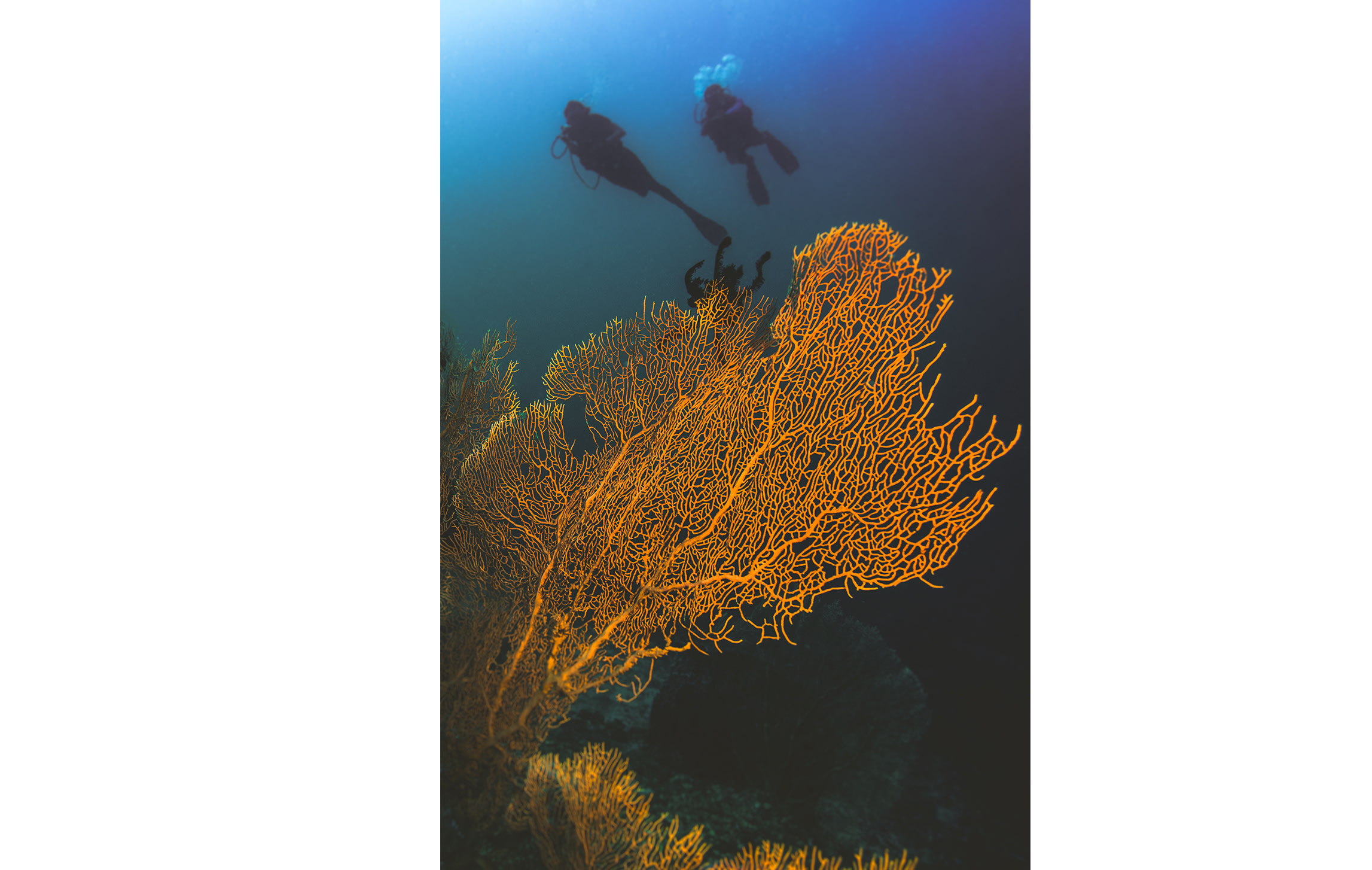Coral reefs support enormous biodiversity. It is estimated that close to 4,000 different species can live together on a single reef, which represents a hundred times the diversity found in the open ocean.