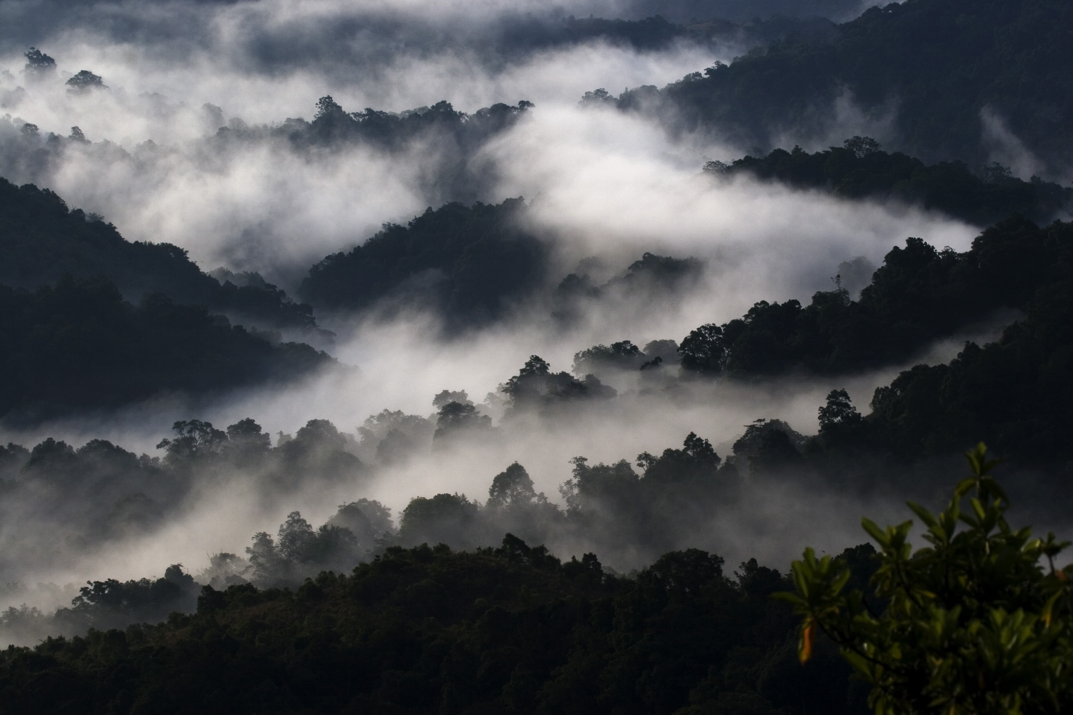 Once almost lost to an ill-conceived proposal enchanting Silent Valley National Park in Kerala is testament to the power of people's movement that saved it. Photo: NP Jayan