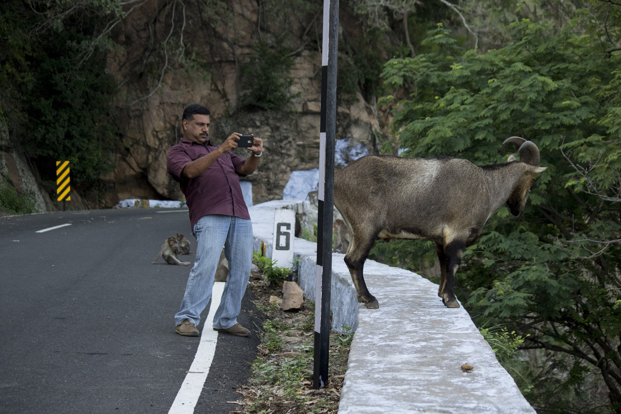 Sensitising tourists to the risks of getting too close to wild animals or feeding them is the need of the hour.  Photo: Pravin Shanmughanadam