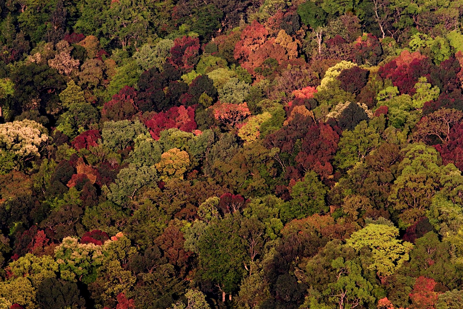Under this riot of colours of Silent Valley National Park lies a mind-boggling diversity of living organisms. Photo: NP Jayan