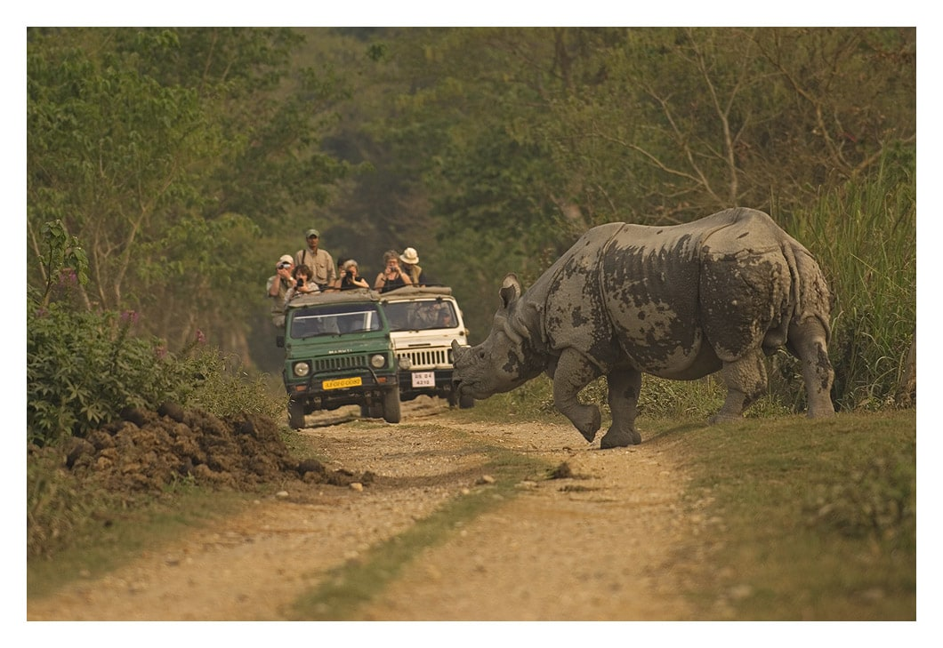 The economy of Kaziranga depends on the survival of the greater one-horned rhino. The 2017-2018 tourist season welcomed 177,431 visitors.