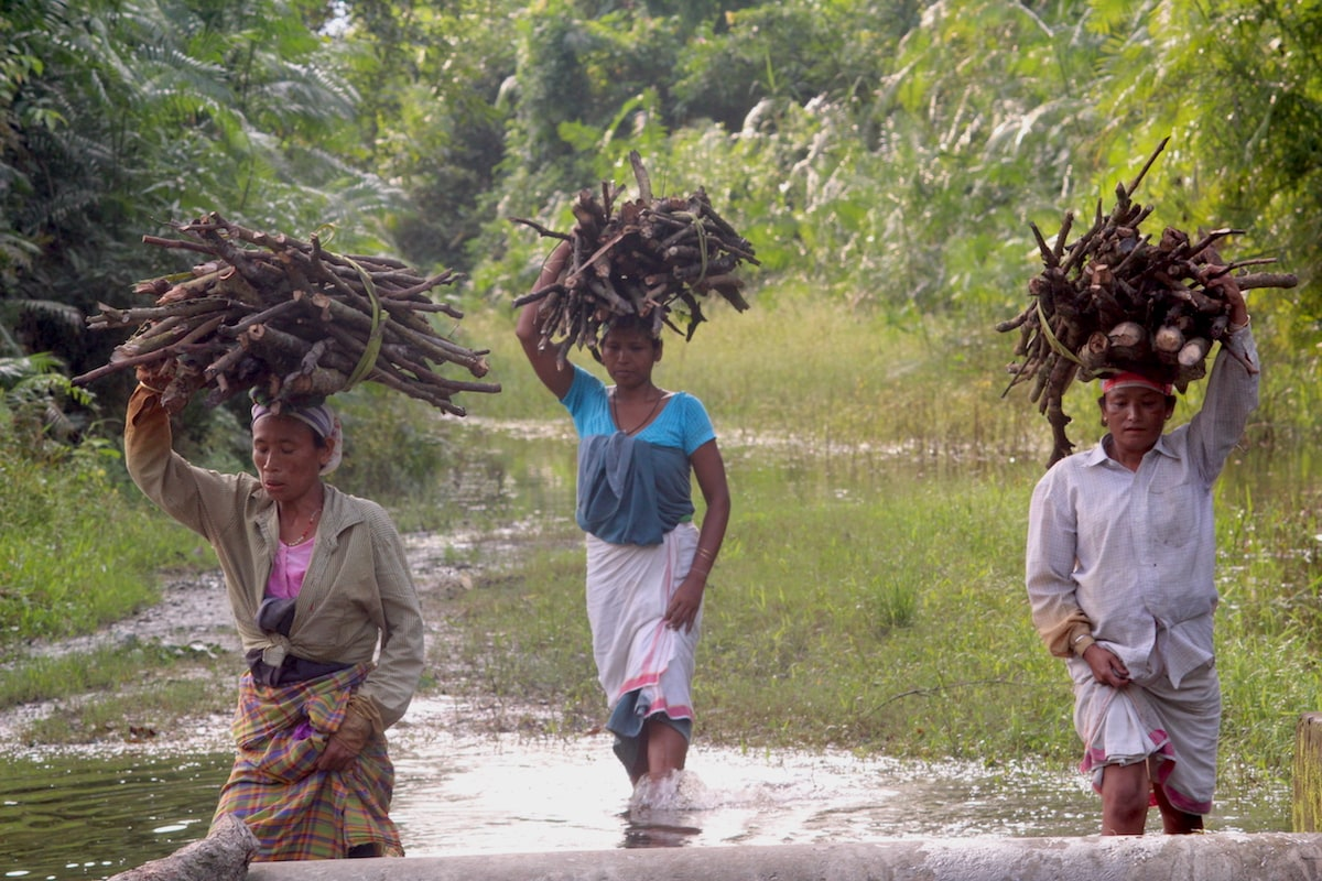 Three women near Singiyoni, a village that borders on Pani Dihing Wildlife Sanctuary in the Sivasagar district of Assam, return home carrying bundles of firewood collected from the forest. Photo: Sudakshana Gogoi.