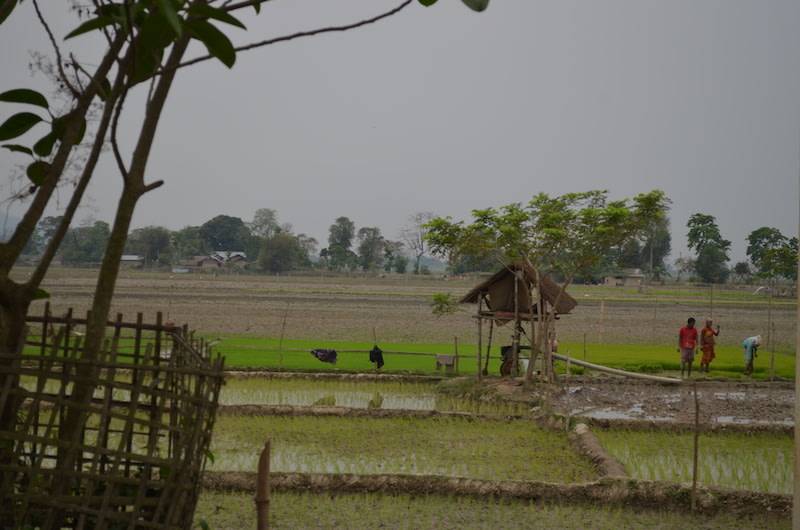 Farmlands of Dhoba-ati Belguri village, adjacent to Kaziranga National Park in Assam. Photo: Bikash Kumar Bhattacharya.