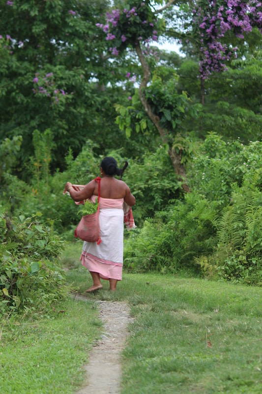 Where access is permitted, forests are a major source of food for the surrounding communities. Near Singiyoni in the Sivasagar district, a woman walks home after collecting fiddlehead ferns, a popular vegetable that grows abundantly in the forests of Assam. Photo: Sudakshana Gogoi.