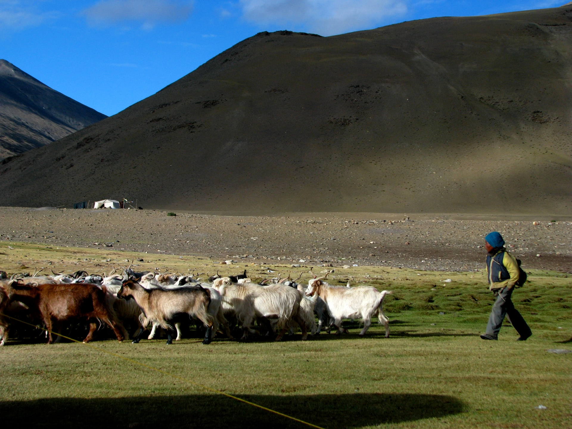 The rangelands across the Indian Trans-Himalayas are low-productivity regions. However, increased summer temperature and melting snow provides these areas with a much-needed burst of green. Photo: McKay Savage/CC BY 2.0