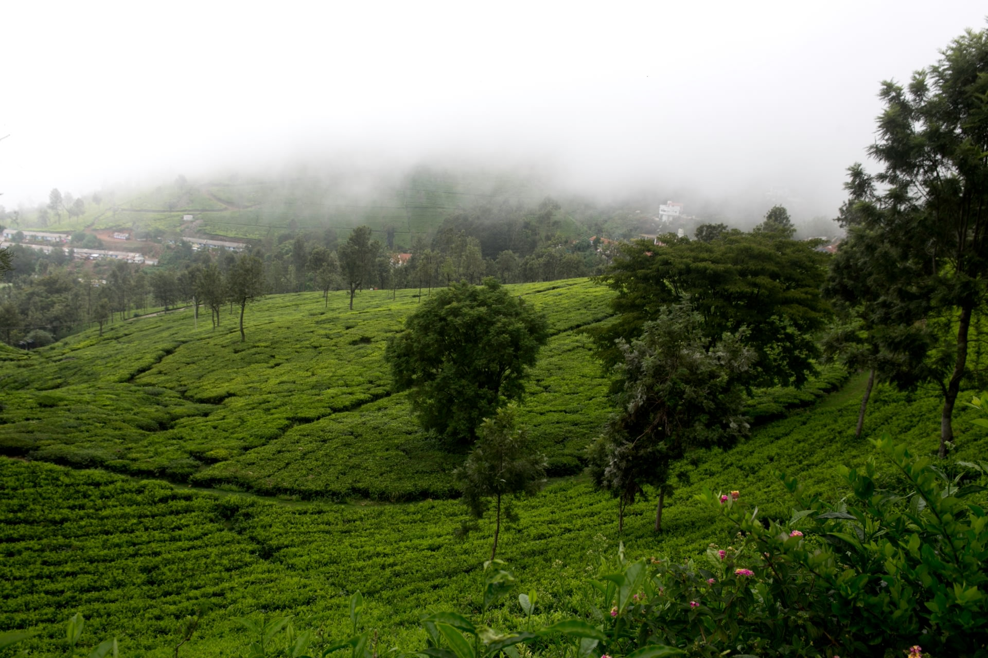 Coonoor in Tamil Nadu is a misty hill station surrounded by the lush green Nilgiri hills, interspersed with tea plantations, ravines, valleys and waterfalls. Photo: Jalebiji/ Shutterstock  The Malabar pied hornbill is commonly recognised by its yellow bill with a black base and an oversized yellow and black casque on the top of it. The casque amplifies the nasal sounds the bird makes and also acts as an indicator of sexual maturity. Photo: Rajan Hatiskar / CC BY-SA 4.0