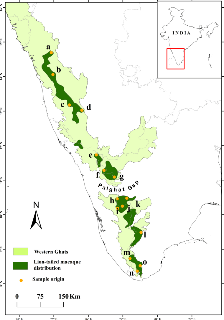 Map shows how LTM populations are restricted to fragments of rainforests across the Western Ghats. Image from the paper Ram et al (2015) published in the journal Plos One.