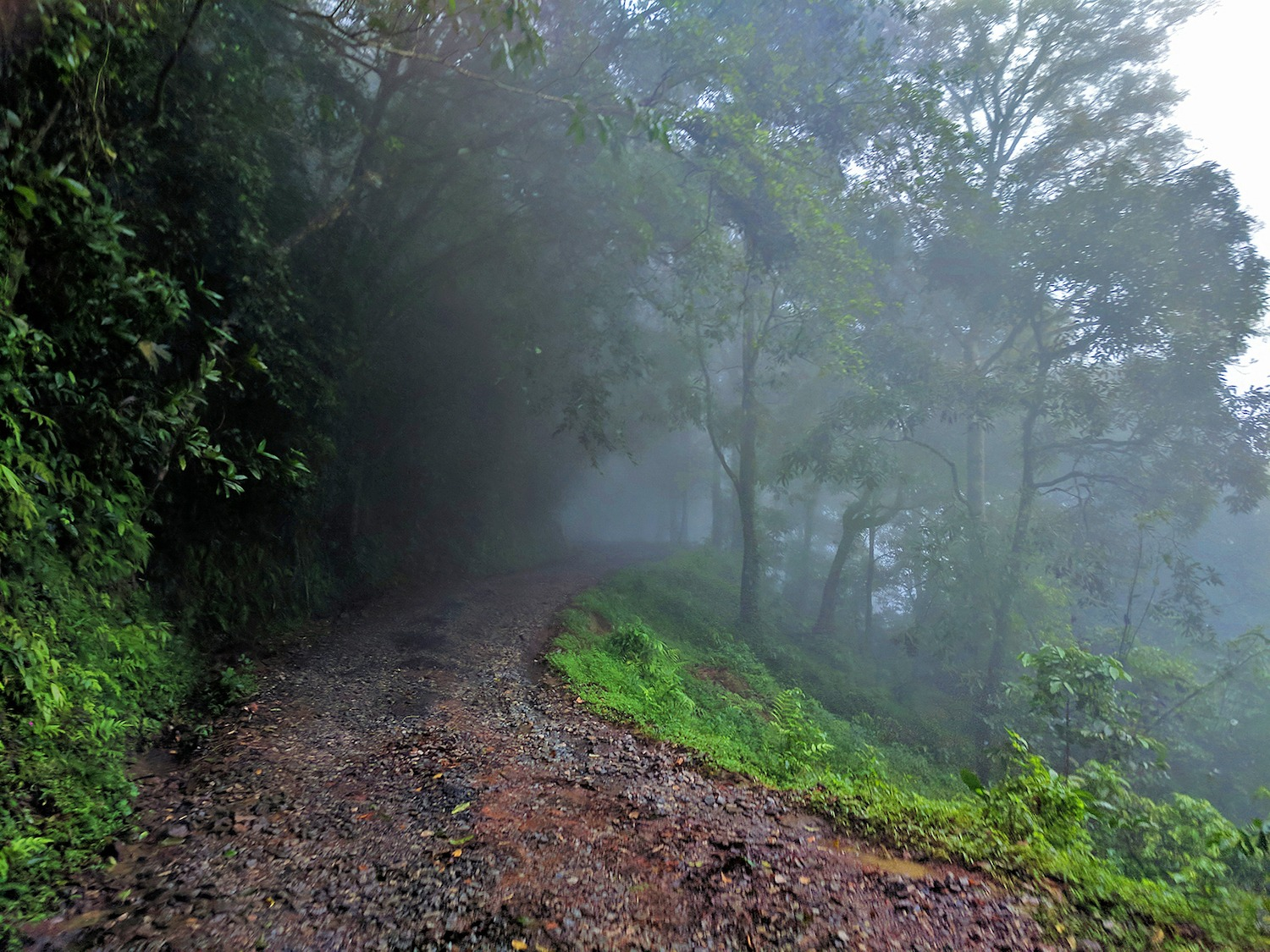 Wayanad's misty winding roads offer a prelude to the mysteries of the ancient Western Ghats that are waiting to be uncovered by those who wish to walk on the wild side. Photo: Shashank Birla