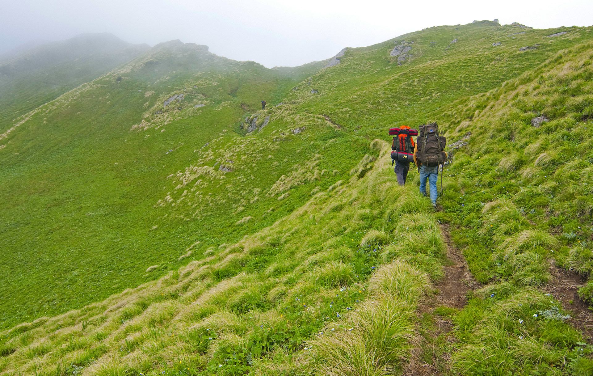 In April 2011, I made my annual pilgrimage to Himachal, arriving early, intending to beat the seasonal inflow of hikers and locals. My journey began in Sainj Valley known for its meadowed hillsides. A fortnight later, there was still no sign of the brown bear.