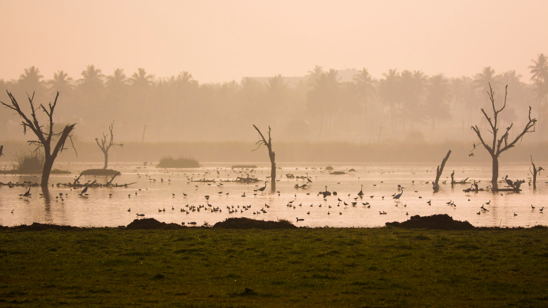 Dawn slowly warms the mist at Hoskote Lake and the many resident and visiting bird species begin their day. Photo: Samuel John  Ducks can be seen on the shore preening and preparing their feathers for the day's swim. Cover Photo: Samuel John