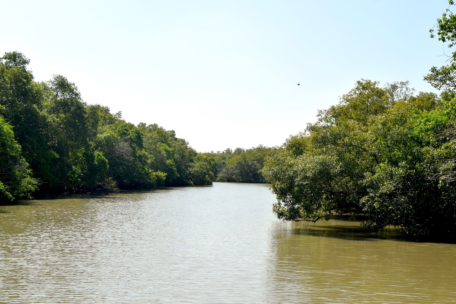 The Muthupet wetlands and lagoon are part of the Great Vedaranyam swamp, and are lined with mangrove forests. According to the Tamil Nadu Tourism website, this habitat hosts over eighty species of migratory birds during winter, including flamingos, pelicans, ducks, and terns. Photo: Shoma Abhyankar