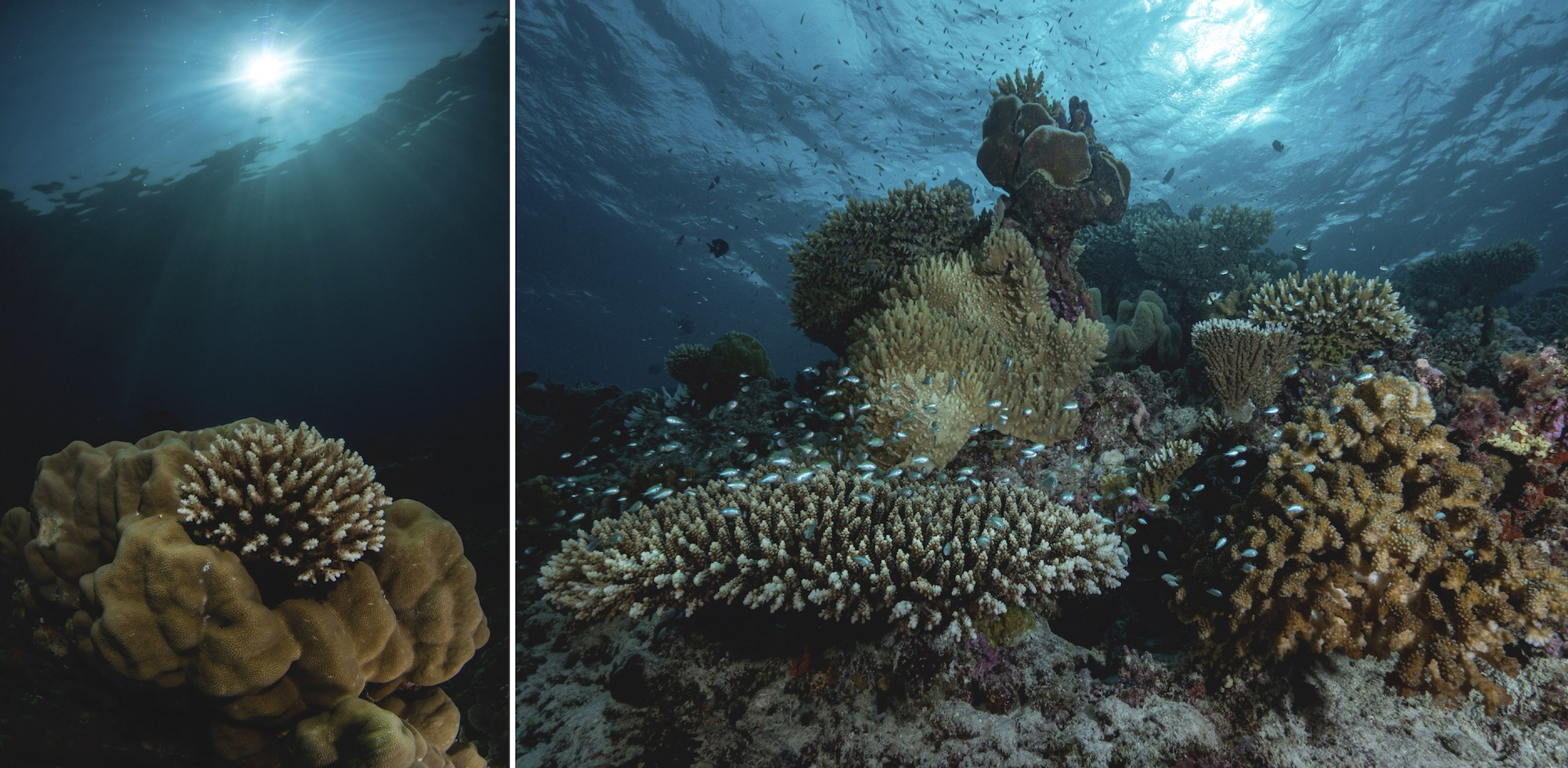 An entire ecosystem is at the edge of collapse and we mustn't let it vanish with just another headline (top). Coral reefs require moderately clear and optimally warm waters to thrive (bottom left). Coral reefs are so full of diverse marine life that one imagines they could never run out. In the 21st century, however, more and more of the ocean's life forms are being led to extinction (bottom right).