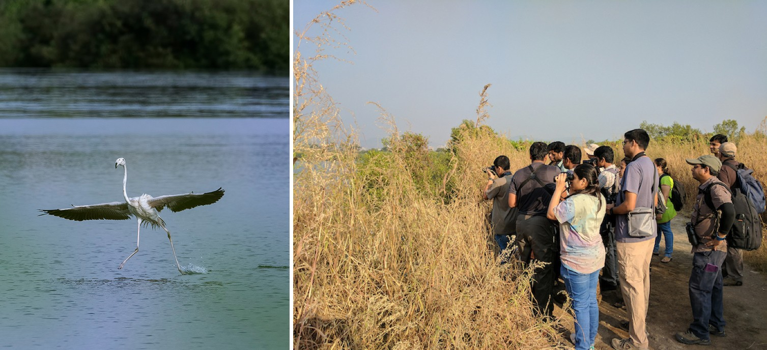 Groups of birdwatchers (right) stand at a respectable distance to watch and photograph birds. Juveniles of both greater and lesser flamingos are pale in colour, in the case of the greater flamingo (left), even the bill is white with a black tip. Photos: Shashank Birla