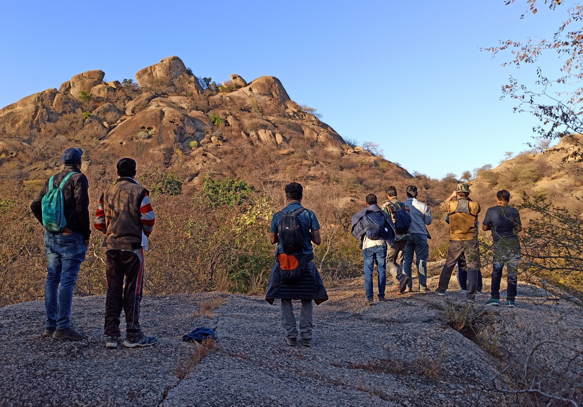 A group of birding enthusiasts wait for a hyena to remerge from its den on a hill in the Kumbalgarh Wildlife Sanctuary in the Aravallis. Photo: Rohit Kumar  An oriental honey buzzard takes off from its perch in Rajasthan's Todgarh-Raoli Wildlife Sanctuary. These buzzards can be distinguished from other raptors by their pigeon-like heads. Photo: Mayank Bohra