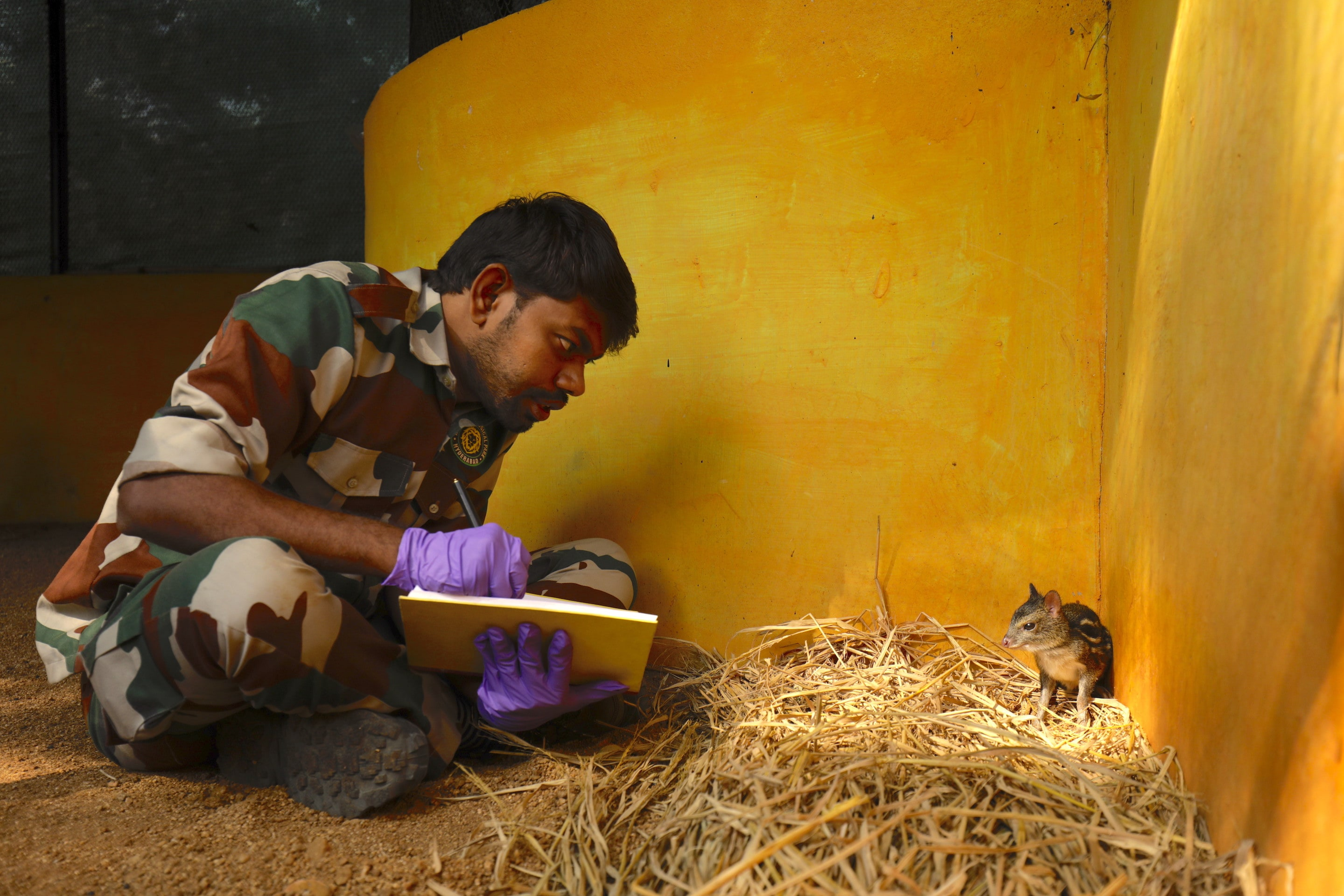 A park official collects data on the mouse deer at the Conservation Breeding Centre at Nehru Zoological Park, Hyderabad. Photo: VB Tajeshwar
