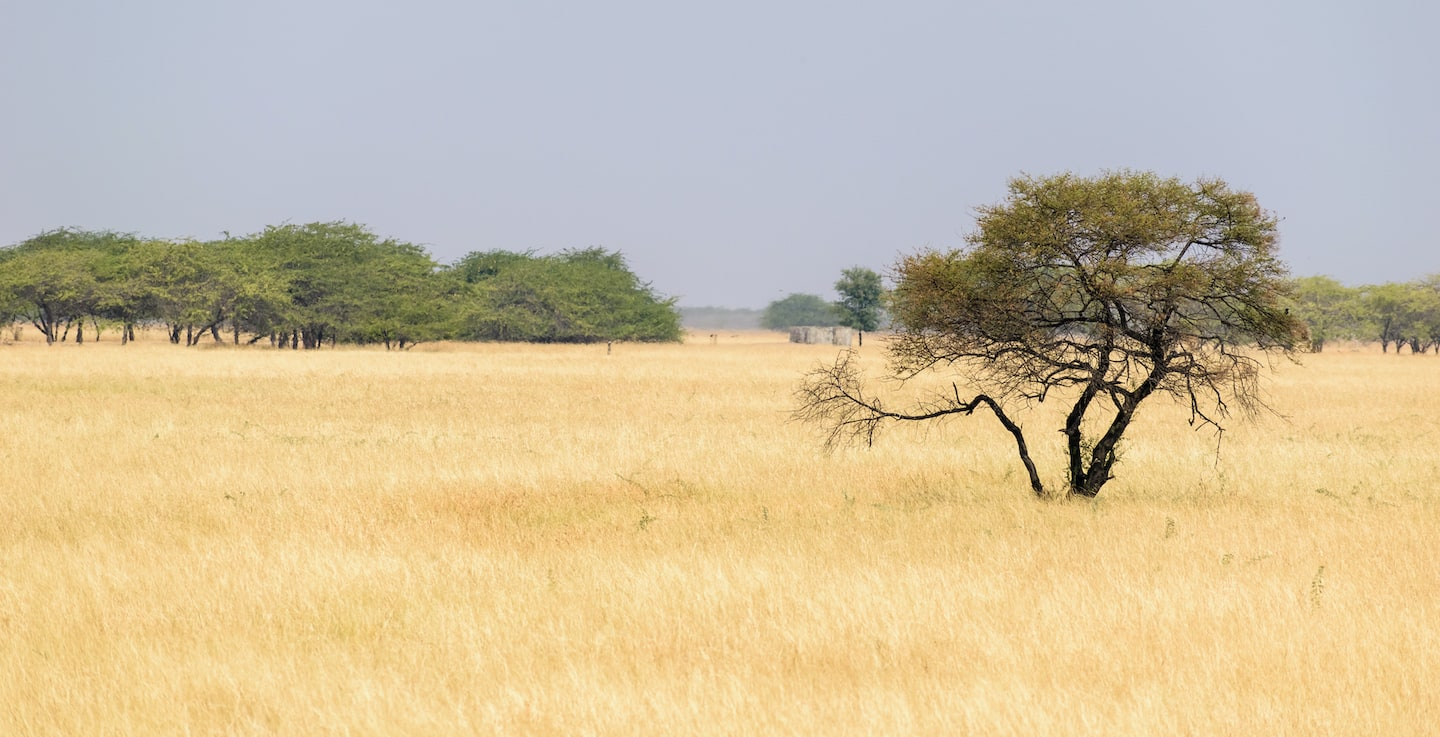 Blackbuck National Park, Velavadar, in Gujarat is a vast, pristine grassland known mostly for the herds of blackbuck seen in the area, but also a wide variety of grassland birds and predators such as the Indian grey wolf and the striped hyena. Photo: balajisrinivasan/Shutterstock  Allahrakha Khan hails from a long lineage of men who have guarded the Velavadar grasslands, much before it was declared a national park. Cover Photo: Manan Dhuldhoya