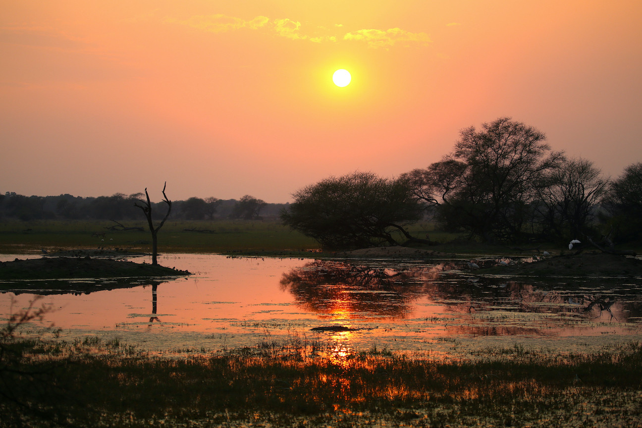 Keoladeo National Park is a mosaic of wetlands, woodlands, and grasslands. It is most popularly known for its marshes, swamps, and lakes because they attract a wide variety of waterbirds. Photo: Charukesi Ramadurai