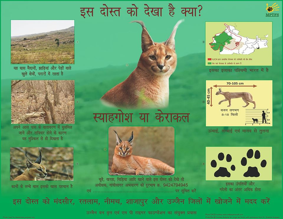 "A public campaign poster released by the Madhya Pradesh Tiger Foundation Society and the Ujjain Circle of the Madhya Pradesh Forest Department invites the public to report sightings of this ""friend"" if spotted in various districts of the state. Photo courtesy: Raza Kazmi"