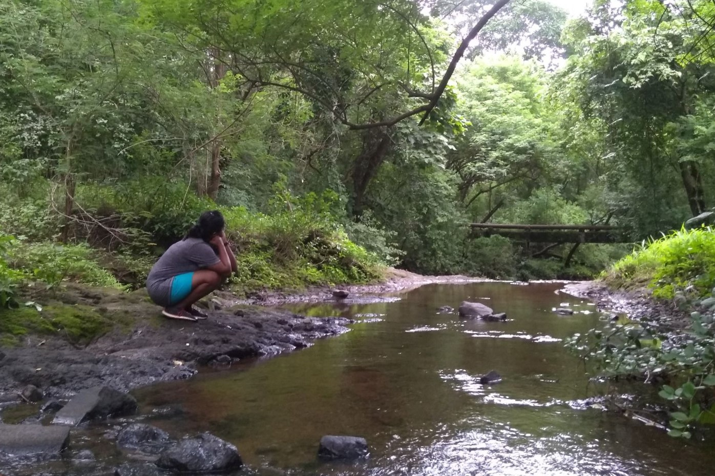 After the initial onslaught of the monsoon recedes, the flow of the stream ebbs, and one can experience the sights and sounds of the forest. Photo: Anirudh Nair