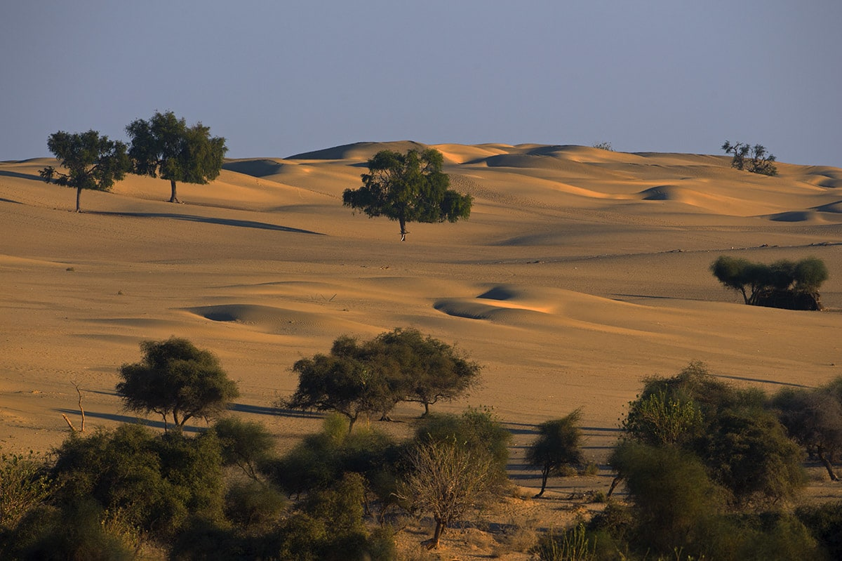 """The Thar Desert represents a remarkable example of geological change. The landscape is largely barren right now, but archaeological evidence suggests that it was a hot and humid habitat in the Jurassic Period, """"characterised by dense forests,"""" according to the IUCN website. """"The fossilised remains of these 180 million-year-old forests are preserved in Wood Fossil Park at Akal, 17 km from Jaisalmer."""" Photo: Dhritiman Mukherjee  Rajasthan's Desert National Park is a spread over 3,162 sq km, and inhabited by numerous species of raptors, including migratory Egyptian vultures. Cover photo: Dhritiman Mukherjee"""
