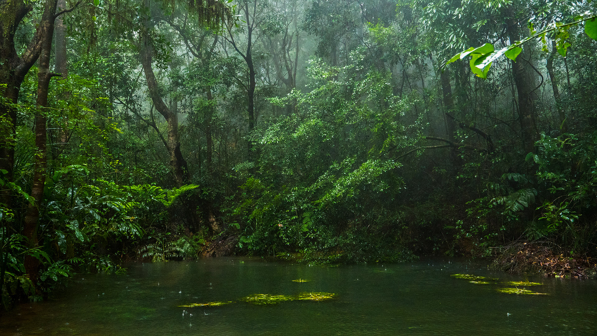 The landscape around Agumbe has a fine dendritic network of streams that come alive in the monsoon. Photo: Pradeep Hegde