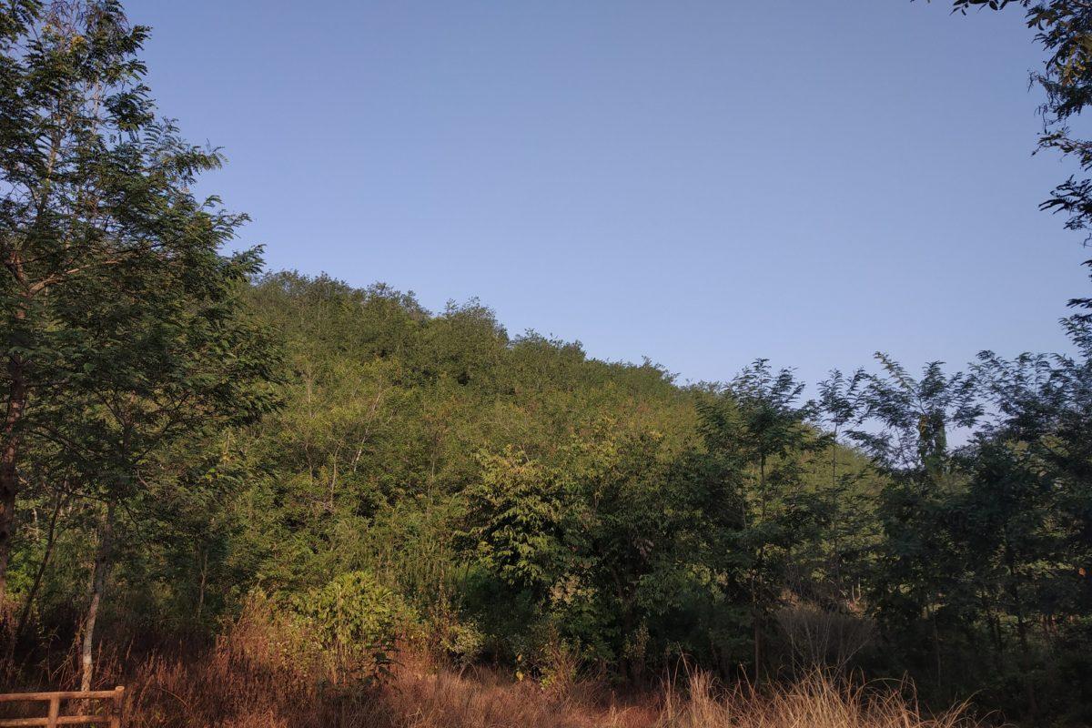 The Pakadi hills forest conserved by Bisoyi and her SHG members where peacocks are abundant. Photo: Pragati Prava