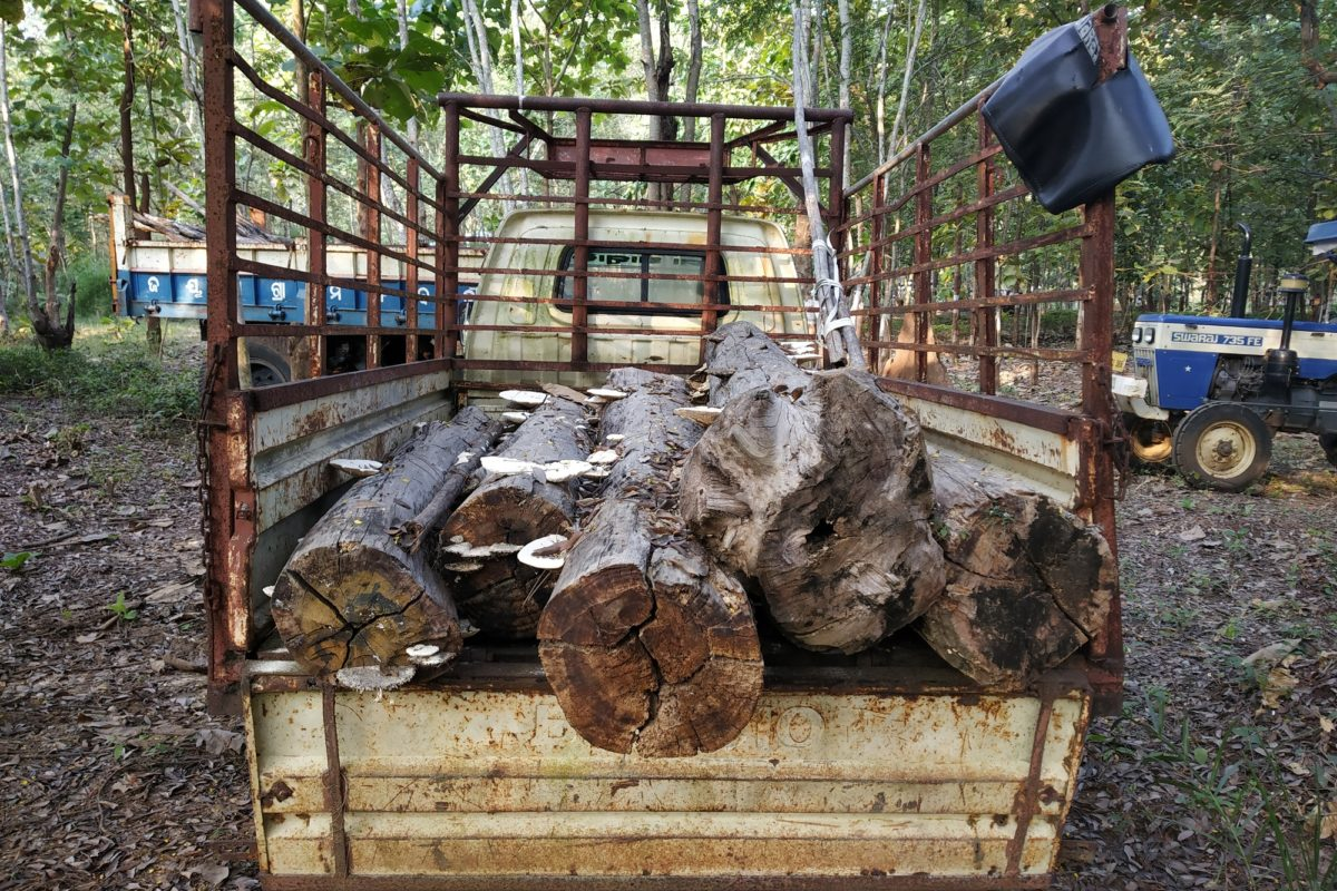 Timber logs seized by Pramila Bisoyi and her SHG members from forest smugglers. Photo: Pragati Prava