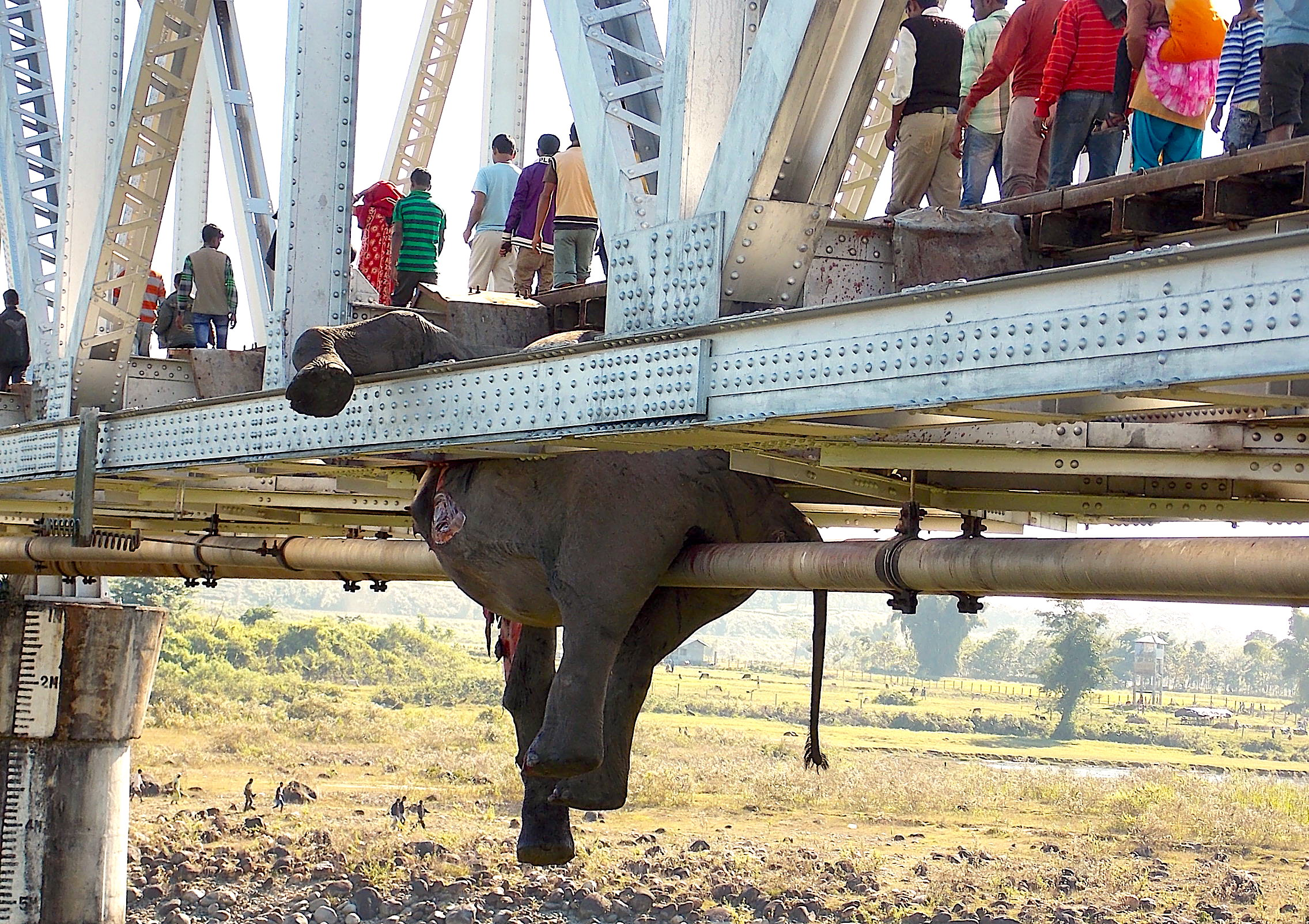 One of the six elephants killed by a speeding train on a railway track in Jalpaiguri, West Bengal, in November 2013. More than 1,200 trains cut through Protected Areas in India, taking a huge toll on wildlife.  Photo: Roni Chowdhury