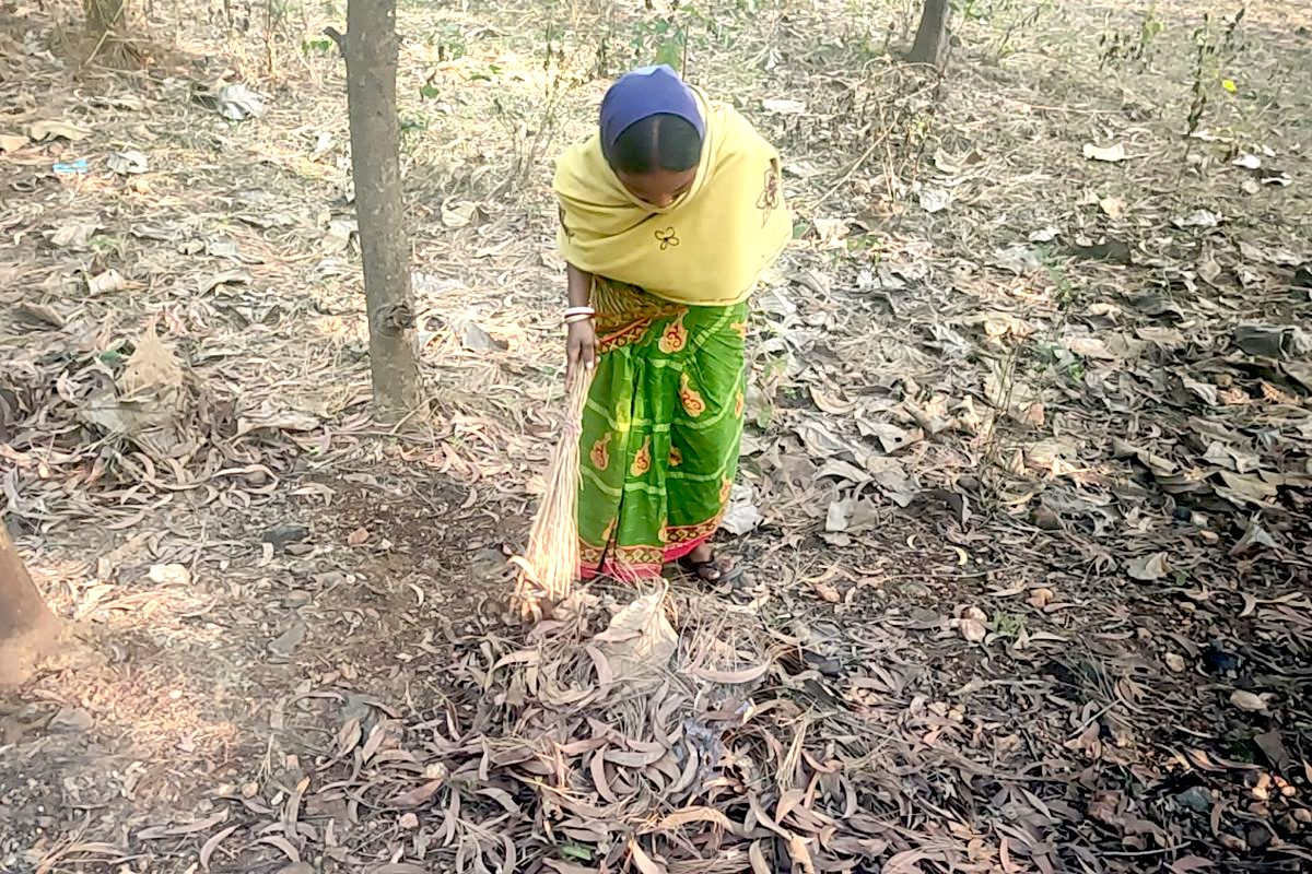 Villagers can now collect dry leaves for fuel from the forest on the Makino Raghunath Mountain. Earlier, they would have to walk long distances to get firewood. Photo: Gurvinder Singh