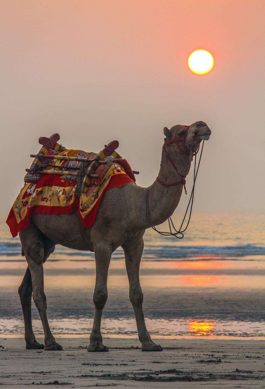 On Karde beach camel rides are popular with travellers, especially children.  Photo: Piyush Pawar/Shutterstock