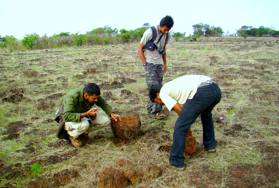 """Herpetologist Nirmal Kulkarni (crouched on the left) spends much of his time finding new areas of biological interest and doing rapid diversity surveys. """"We find areas where conservation is needed,"""" he says.  Nirmal is examining a saw-scaled viper under a rock in Goa's Chorla Ghats. Saw-scaled vipers are small snakes, easy to miss, and quite temperamental. Under duress, they rub their scales together, creating a sound similar to a saw cutting wood. Photo: Adithi Muralidhar"""