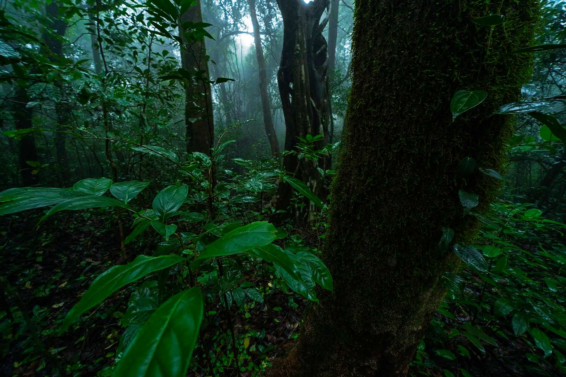 The forest around Amboli is predominantly semi-evergreen with a few patches that are still pristine and undisturbed. These support a rich and endemic biodiversity. Owing to increased tourism, many of these patches are littered with plastic waste and liquor bottles.