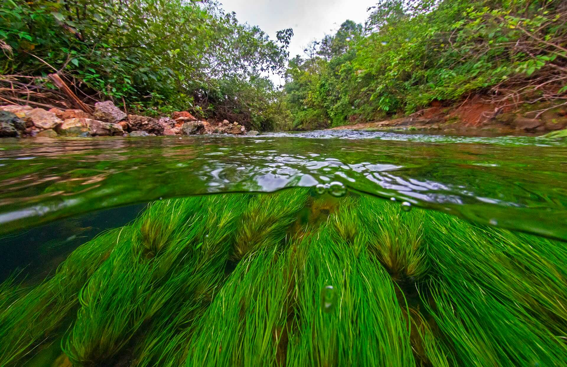 The landscape has many perennial streams, which not only maintain the water table of this landscape but are an abode to the rich aquatic biodiversity. Increased pollution and disturbance of this habitat due to tourism is slowly affecting the health of these streams.