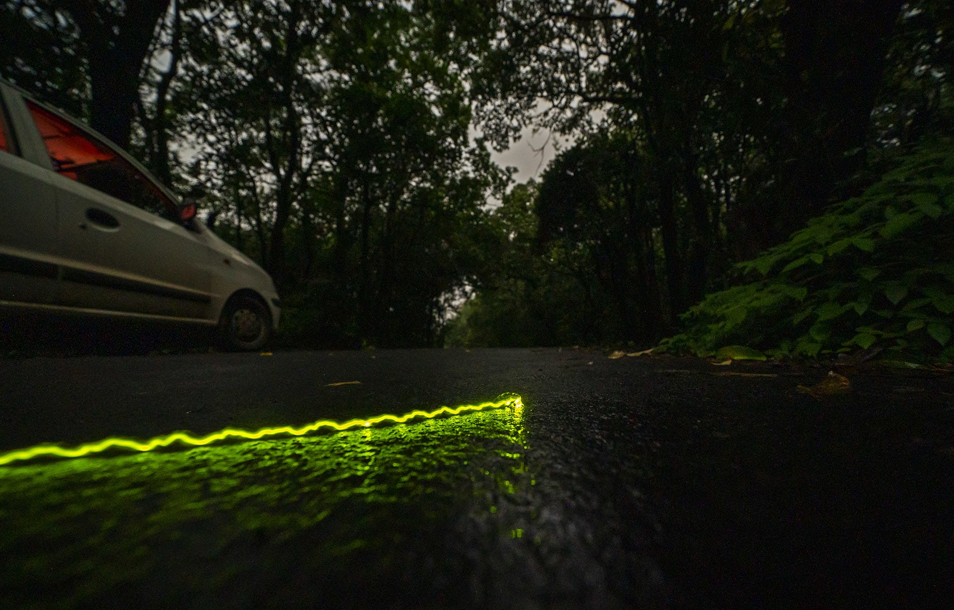 The wingless, larvae-like females or larvae of a few bioluminescent beetles also glow in the night and are commonly called glow worms. They are terrestrial, mostly seen on low bushes or on ground and flash light to attract a mate. A few are known to feed on snails and thus commonly seen during the monsoon. One such glow worm was seen crossing the road during one of the night trails. A little care, a little mindfulness — can go a long way in protecting fascinating species like this in a habitat like Amboli.