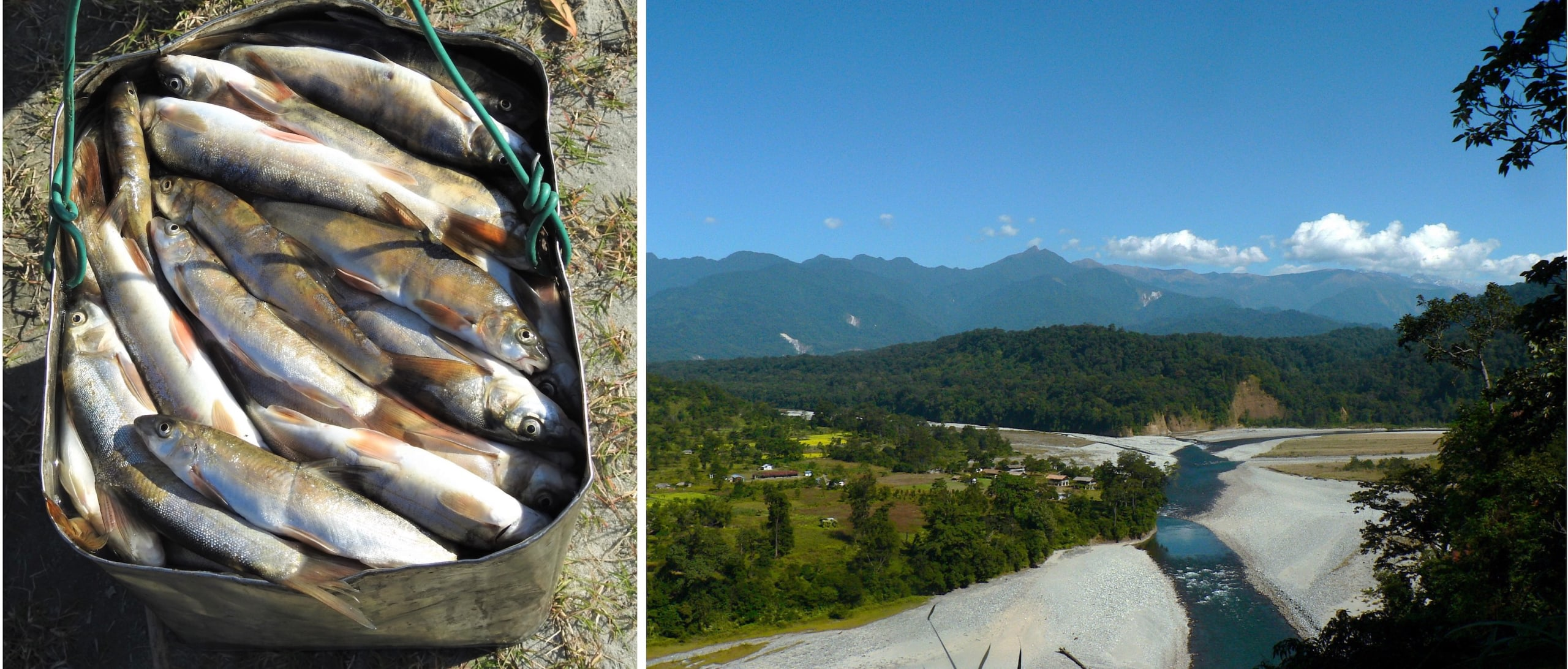 (Left) Fishers in Arunachal Pradesh and Assam have slowly moved away from traditional forms of fishing and some have adapted destructive ways to fish, which not only kill masses of fishes but also most of the living creatures in a section of the river. Using chemicals such as bleach causes tremendous damage several kilometres downstream of the point of application.  (Right) Clearing riverbanks and beds of sand and boulders can have a negative impact on the ecology of the river. The rivers of Arunachal Pradesh hold more than 65 species of riverine birds including some threatened bird species that need conservation efforts to ensure that their population does not decrease further.   Photos: Rohan Menzies (left), Rohit Naniwadekar / CC BY-SA 4.0 (right)