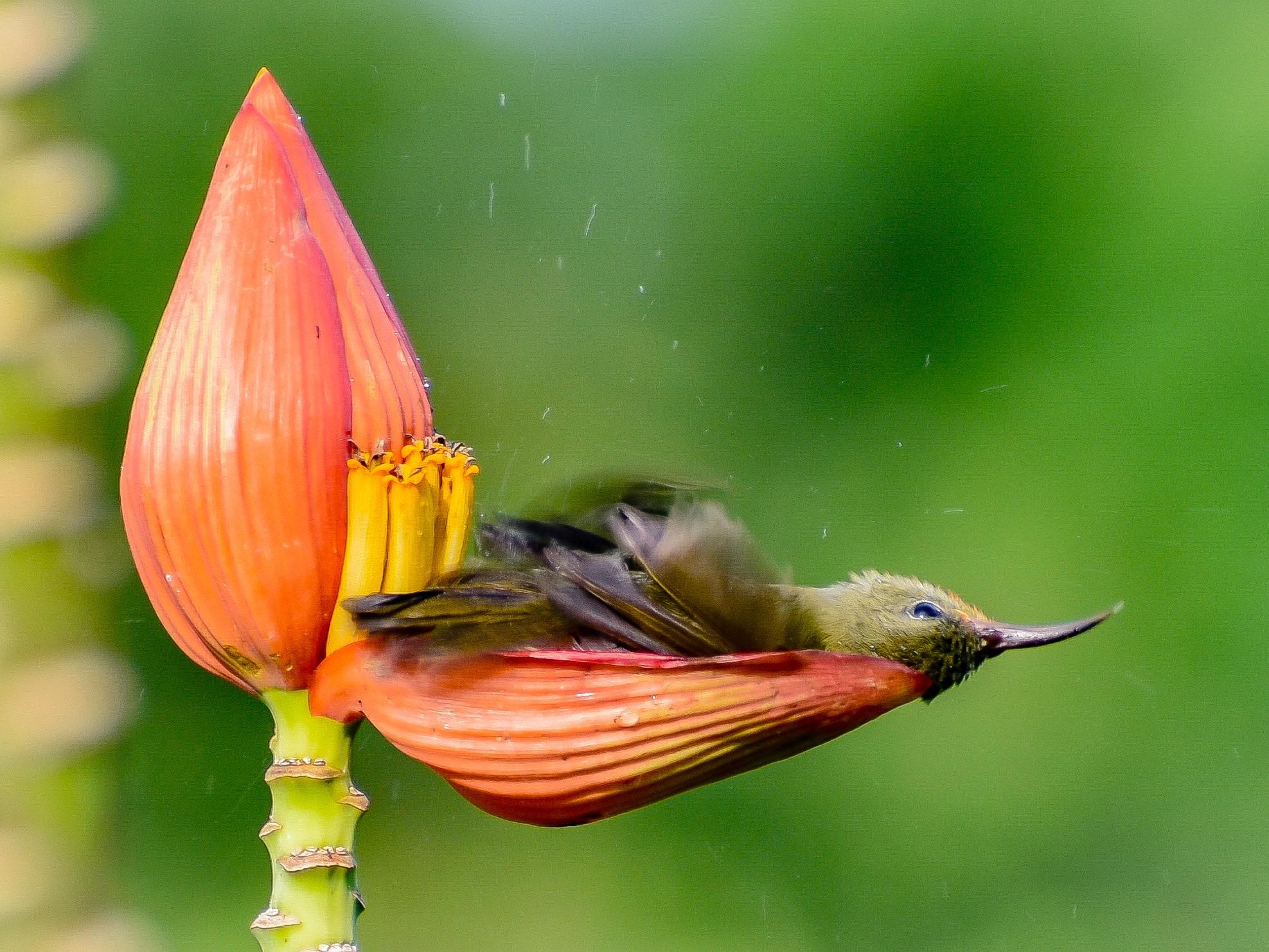 This unique bird bath was photographed by SAMUDRA SENGUPTA of Jalpaiguri, West Bengal.