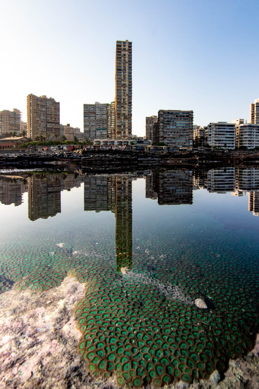 This photograph of a thriving colony of zoanthids against the backdrop of one of Mumbai's most recognisable neighbourhoods, Napean Sea Road, was taken by SHAUNAK MODI of Mumbai, Maharashtra.