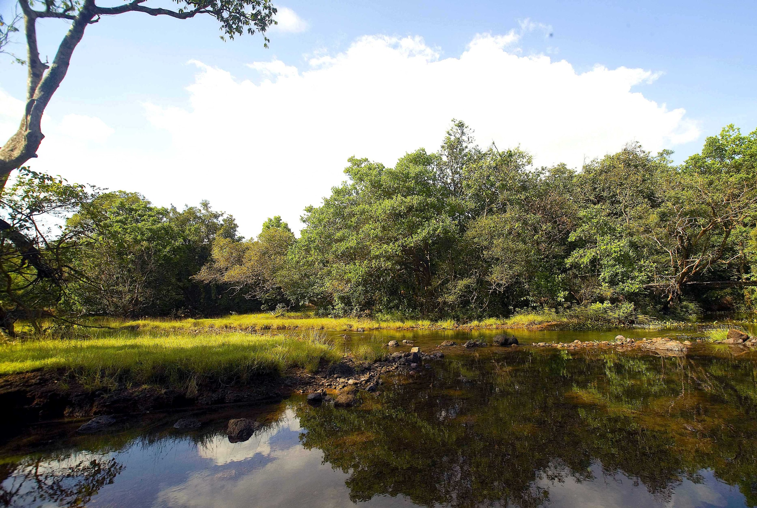 The Dudhsagar River flows through the densely vegetated Kali Tiger Reserve in Karnataka, sustaining wildlife along the way.