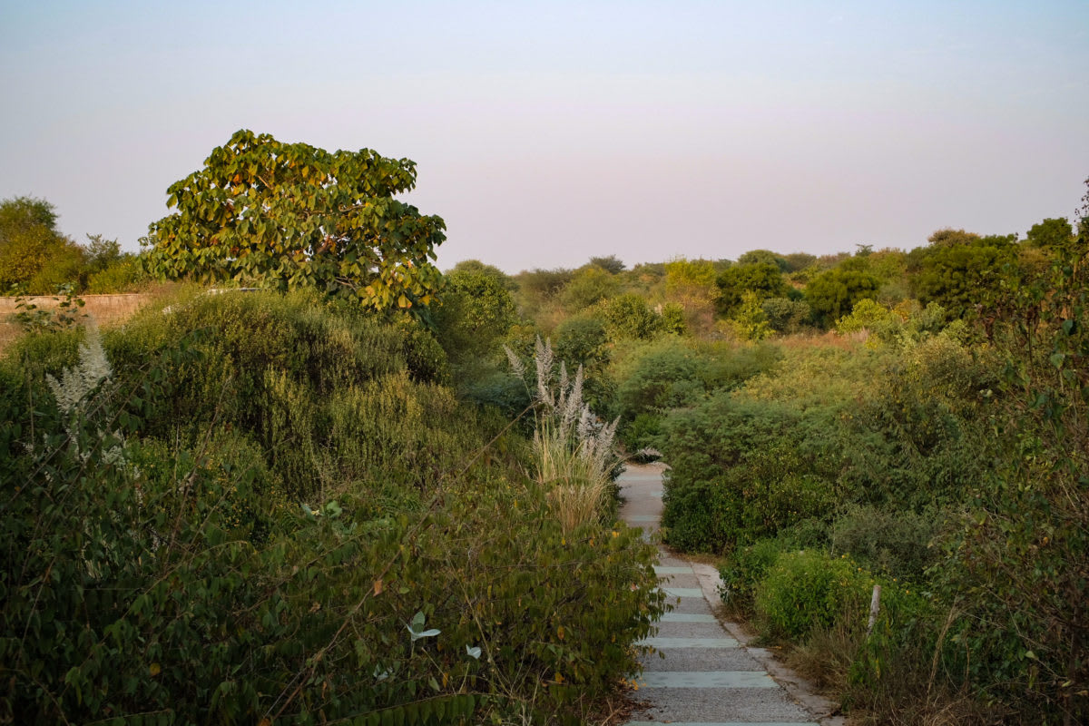 The Aravalli biodiversity park in Gurugram is an example of a successful conservation effort. Photo: Vijay Dhasmana.