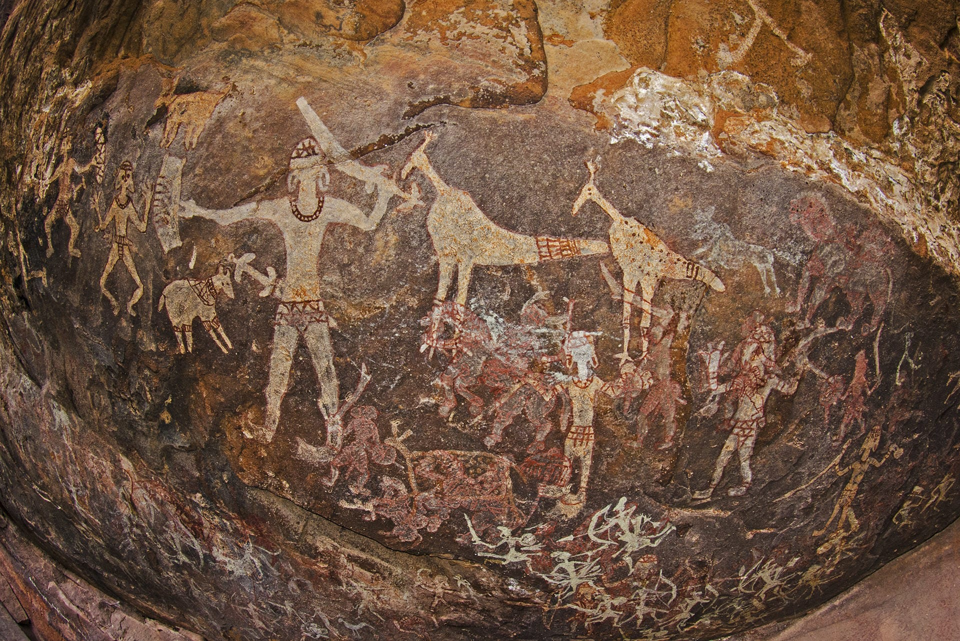 (Top) The Indian gaur is the largest and tallest species of wild cattle found in India. (Above) Prehistoric cave paintings that are at least 10,000 years old, are visible in some of the rock shelters of the Satpura mountain range. The paintings depict animals and birds, and scenes of hunting, dancing, and social life among other things. Photos: Dhritiman Mukherjee