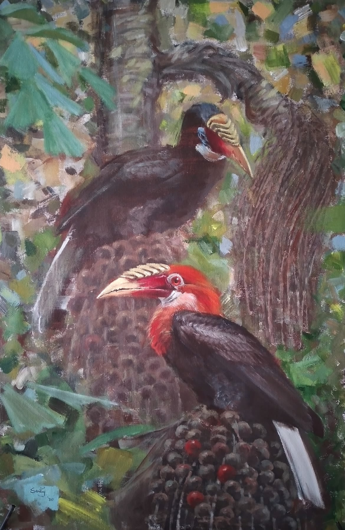 A Narcondam hornbill pair sitting on the fruits of the fishtail palm. 