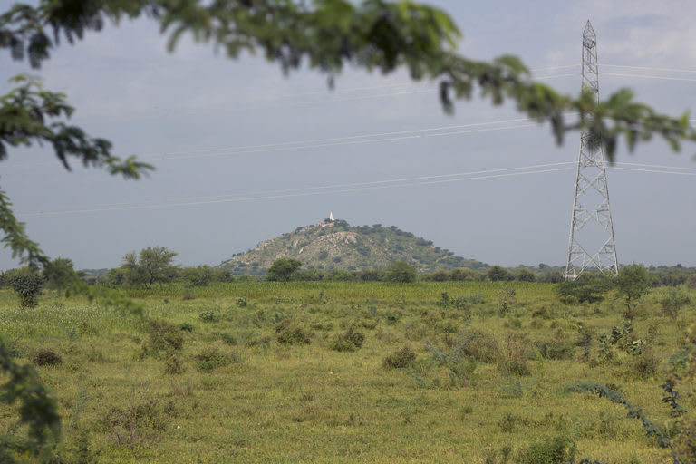 A mosaic of unprotected grassland/shrubland and agricultural land in Shokaliya, Rajasthan, home to the lesser florican. Prosopis juliflora (the tree in the foreground), power lines, changing farming practices are some of the threats to the birds. Photo: Kartik Chandramouli