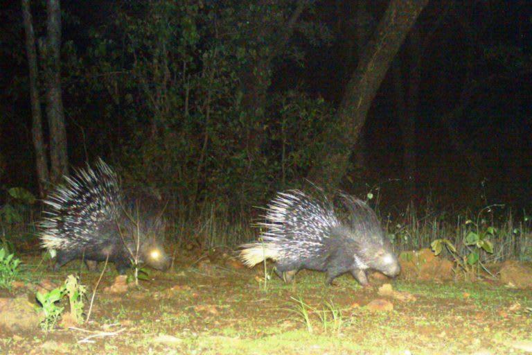 Bhoramdeo Wildlife Sanctuary is an important habitat for wildlife. Photo: Special arrangement